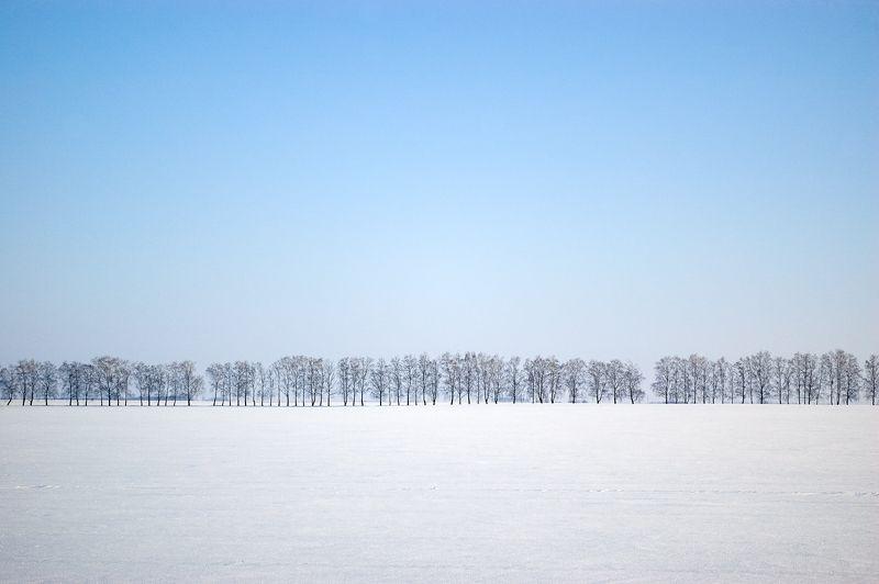 Treeslinephoto preview