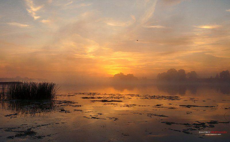 Дубна, Пейзаж, Природа, Рассвет, Река, Солнце, Туман, Утро Позолочен туманным рессветом.photo preview