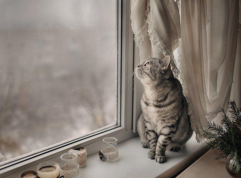 кот, окно, зима, уют, серый, занавес photo preview