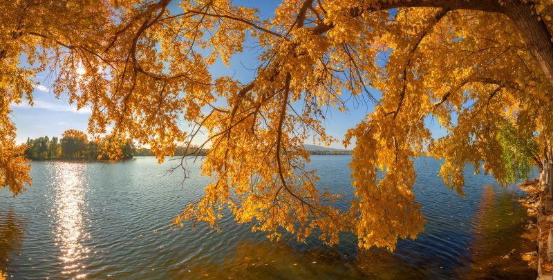 осень Янтарный этюдphoto preview