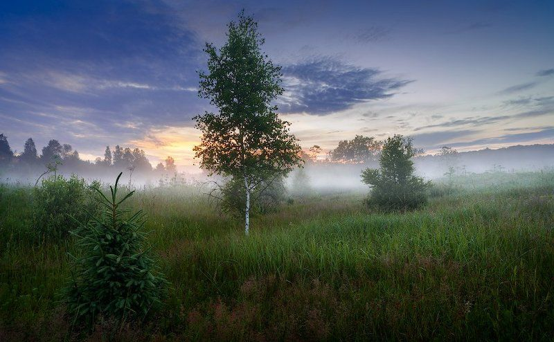 пейзаж, туман, утро, лето, россия Туманное утроphoto preview