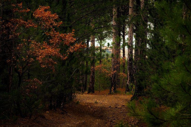Чем глубже в лес...photo preview