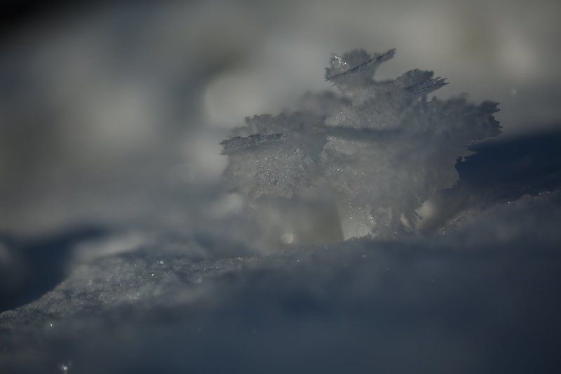 снег, зима, Кавказ, кристалл Зимние цветыphoto preview