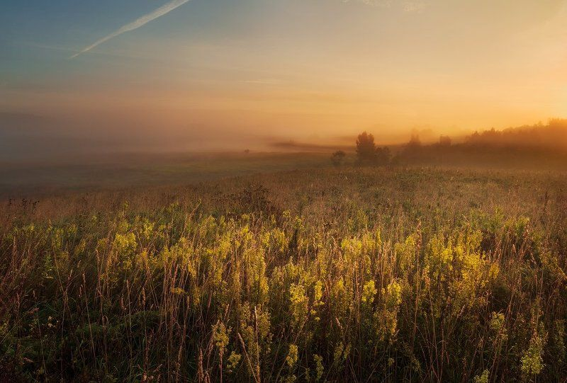 morning, sunrise, mist,  summer, fog, trees,  clouds, colours, meadow, blossom, hills, valley Summers last blossomphoto preview