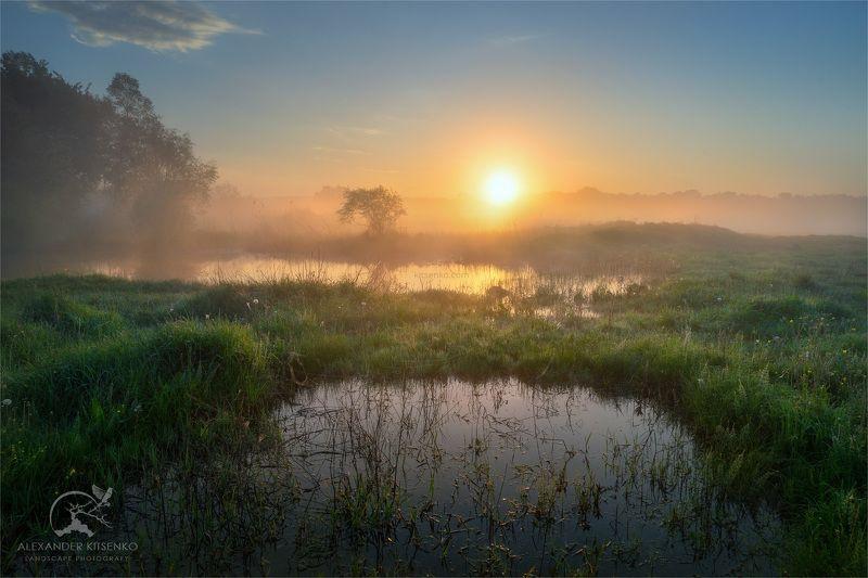 утро, луг, весна, солнце, рассвет, туман О Пользе Весенних Лужphoto preview