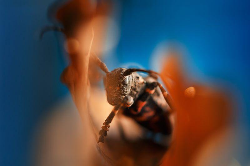 Осенний жук..photo preview