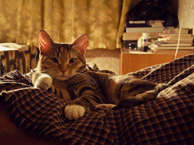 кошка Матильдаphoto preview
