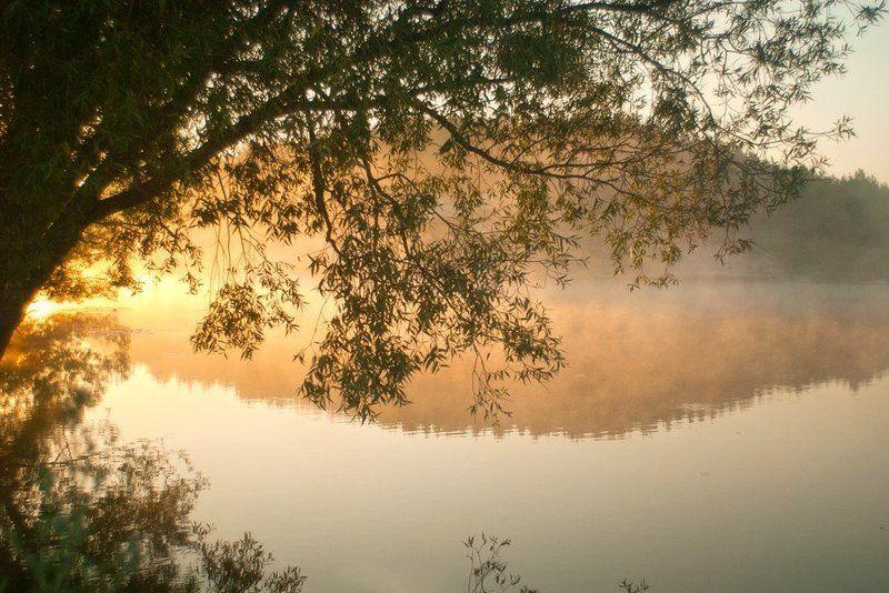 вода, заря, озеро, отражение, природа, рассвет, туман, утро photo preview