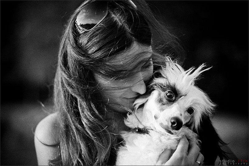 portrait, dogs, pets ###photo preview