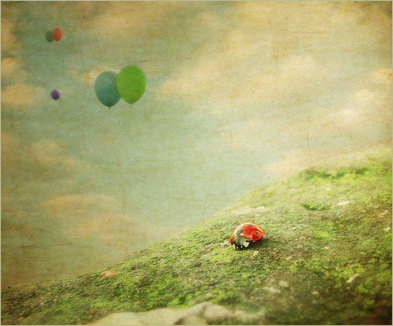 полет, шарики, коровка о копошашихся в земле и о парящих в облаках..photo preview