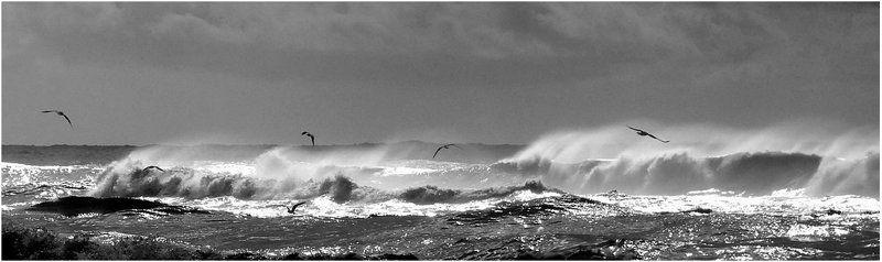 шторм, волны, чайки, море_средиземное Шторм (2)photo preview