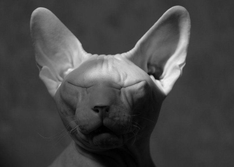 - про кота, который боится страшных историй, но всё равно их слушает... -photo preview