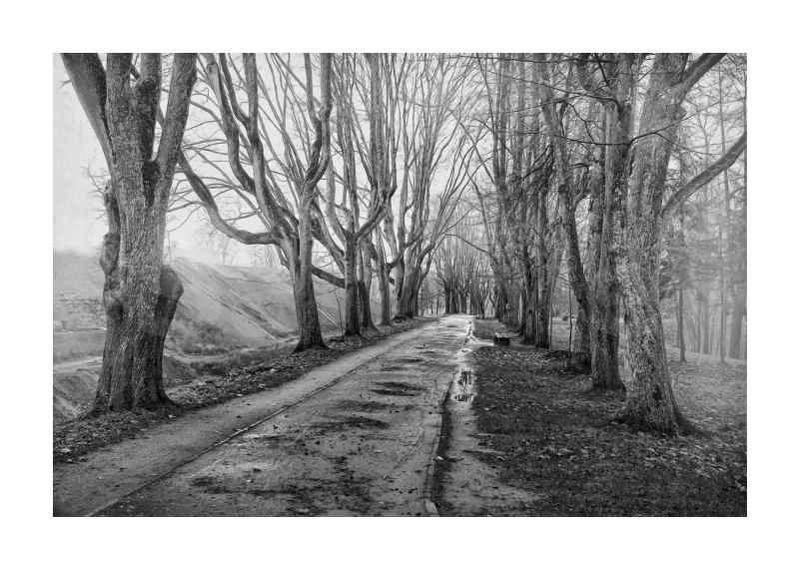 old, tree, black, white, старый, дерево, пейзаж, черно-белый, art, photo a treesphoto preview
