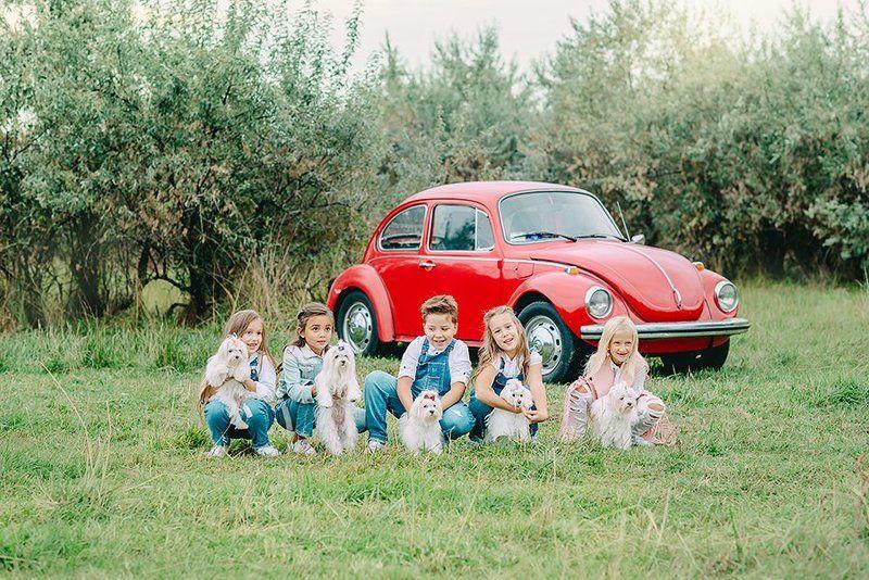дети, ребенок, животное, зверь, семья, болонка, машина, улица, лето, каникулы, природа ***photo preview