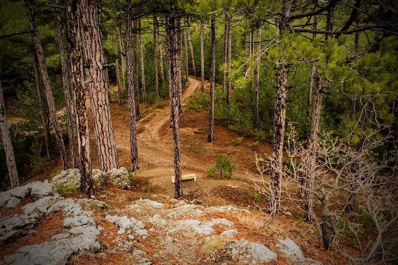 пейзаж, лес, деревья, природа Одинокая скамейкаphoto preview