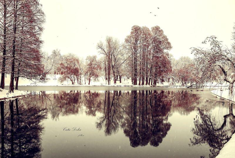 Frozen Lakephoto preview