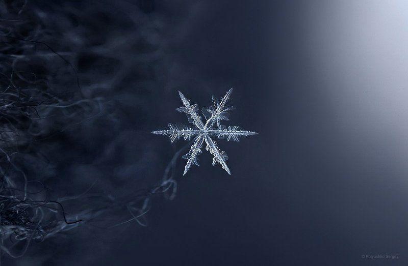 Зима, Макро, Снежинка ***photo preview