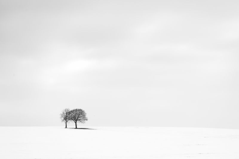 tree, winter, snow, white, valey treesphoto preview