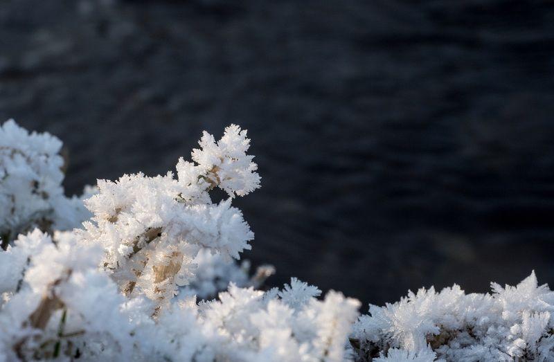 Зимние кораллыphoto preview