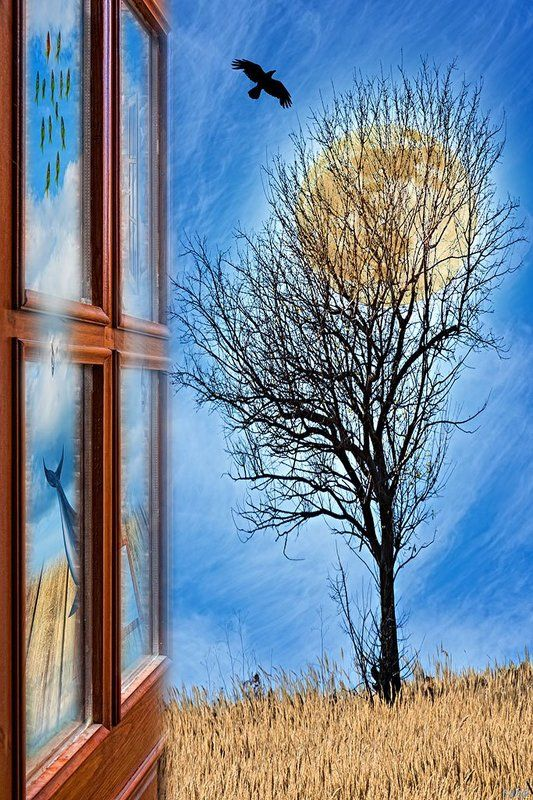art, concept, conceptual, color, colors, color image, collage, composing, digital, digital art, door, editing, moon, photography, photo collage, surreal, surrealism, tree, If I Meet a Bird, I Wave a Friendly Hand at Itphoto preview