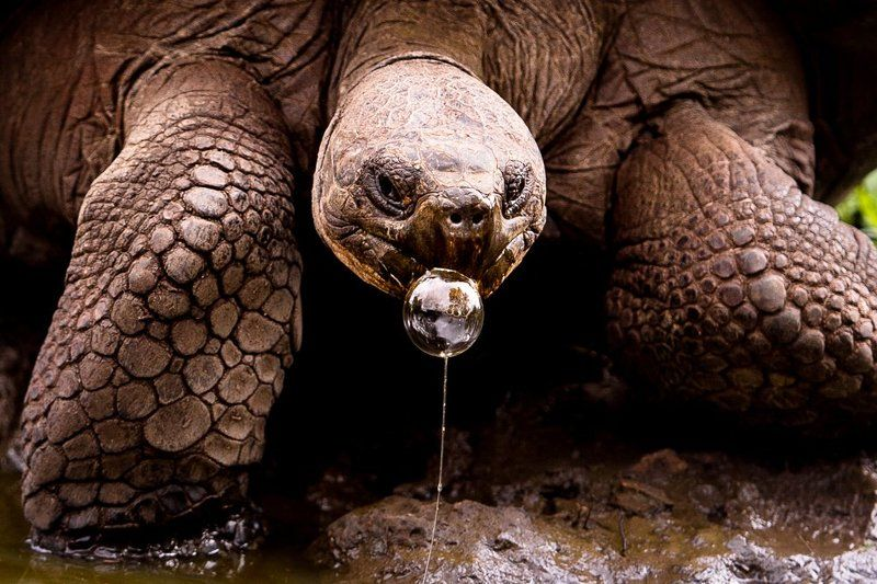 #galapagos #animal #turtle #funny #bubble #bubblegum #nature #portpaite #ecuador  I bet you know nothing about bubble gum!photo preview