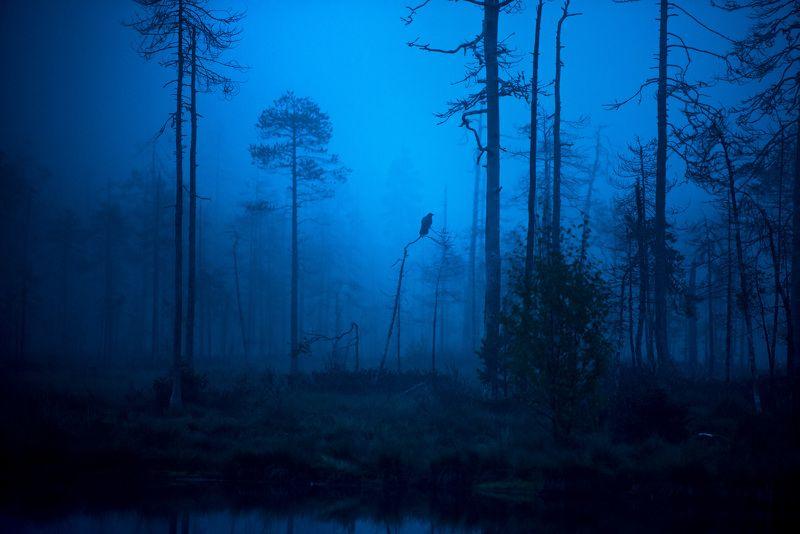 raven, morning, mist, finland Raven in morning mistphoto preview