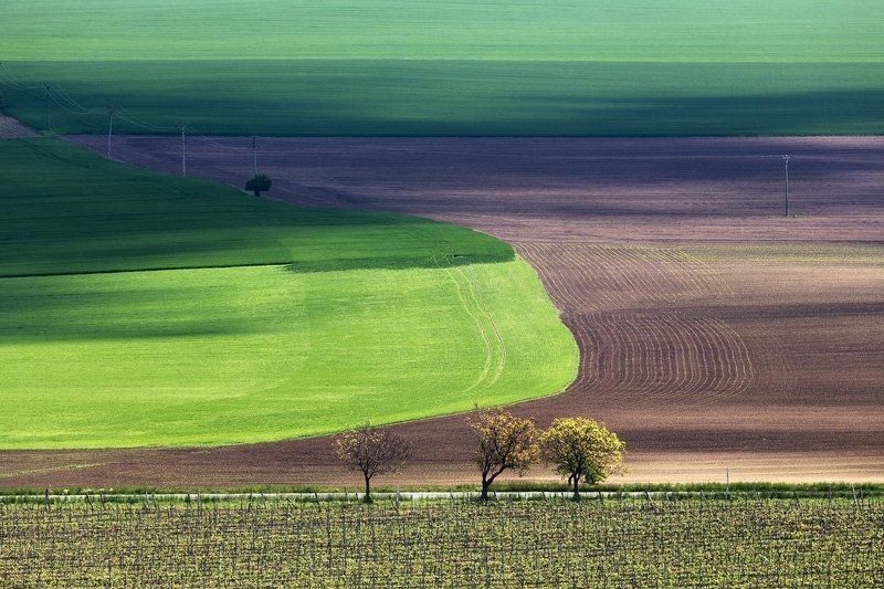 моравия, чехия, весна, май, поле Полевые отношенияphoto preview