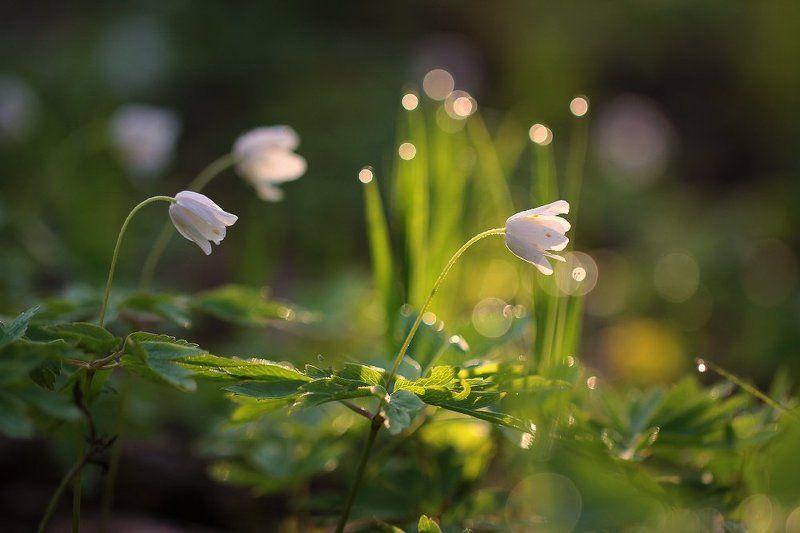 Весна..photo preview