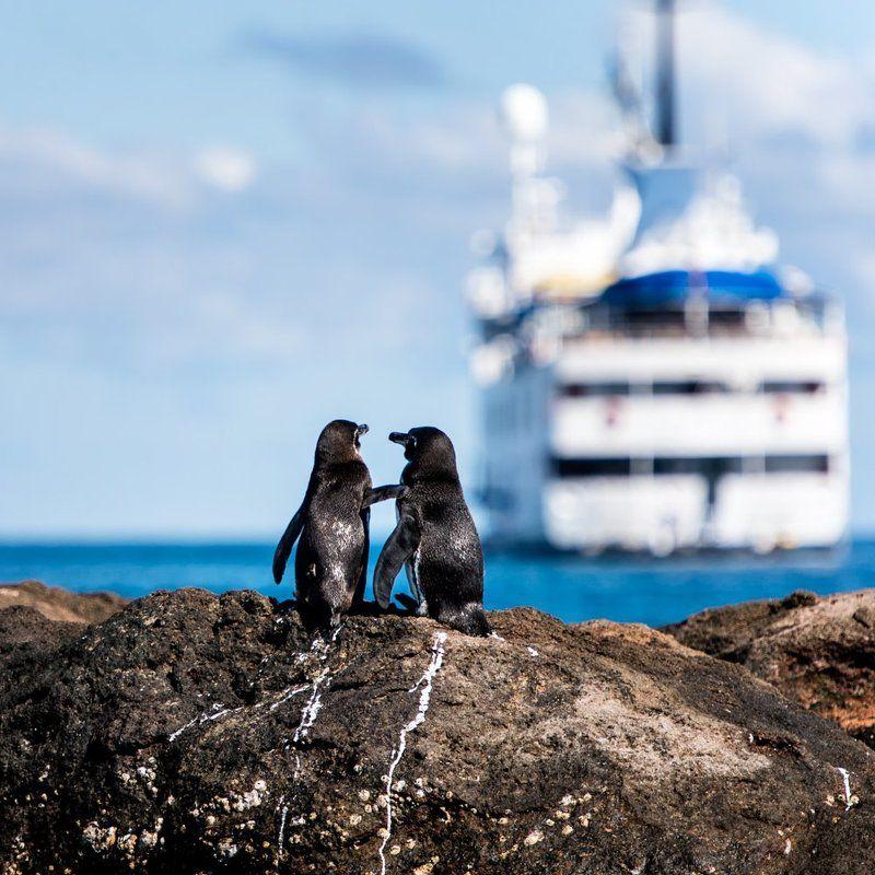 #galapagos #animal #cruise #ship #penguin #romantic #ocean #couple #love #ecuador  Romantic with peguins and cruisephoto preview