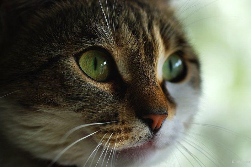 animal, animals, cat, cats, close-up, color image, hypnotic, image, nature, portrait, photography, Hypnotic Gazephoto preview