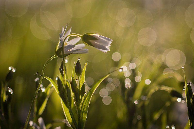 макро,роса,весна Весенний флирт..photo preview