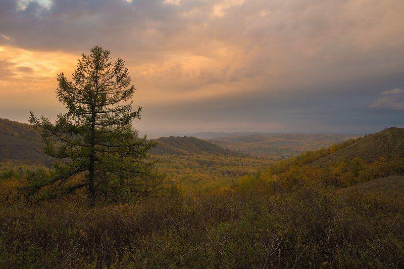 вечер, осень, закат, желтое, лиственница, дождь, простор photo preview
