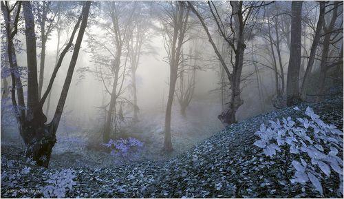 Сказочный лес 8