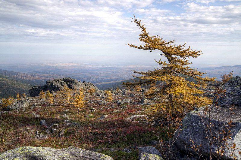 Горы, Лиственница, Северный Урал Породнившись с ветромphoto preview