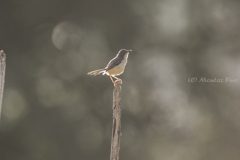 Birdphoto preview