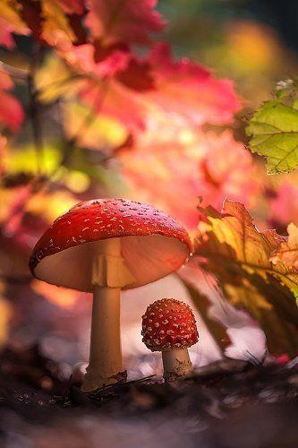Спрятались в осени.