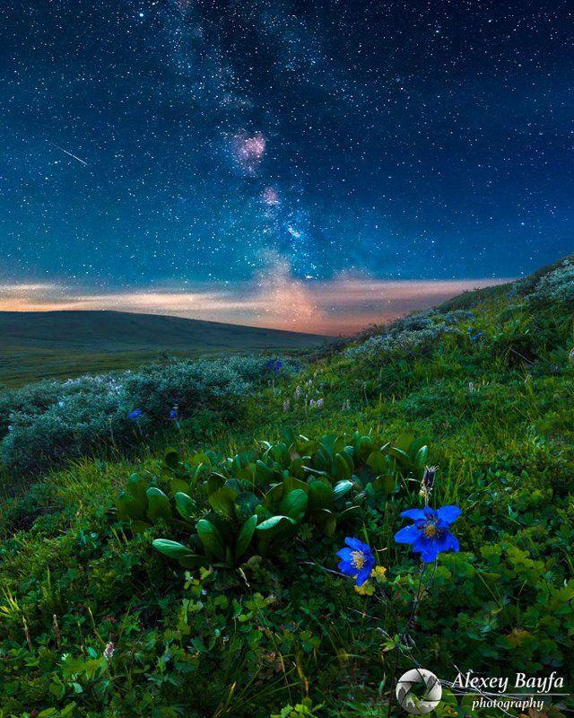 горы, звёзды, лето, млечный путь, цветы, пейзаж, ночь Ночные сказкиphoto preview