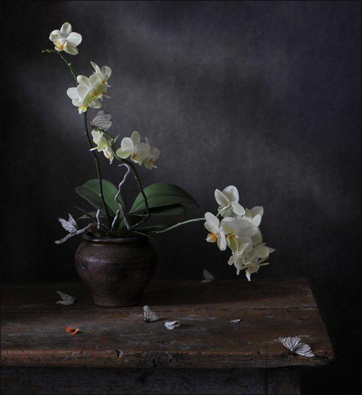 натюрморт,орхидеи, фаленопсис ,бабочки , боярышницы \