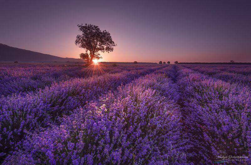 Lavender dreamsphoto preview