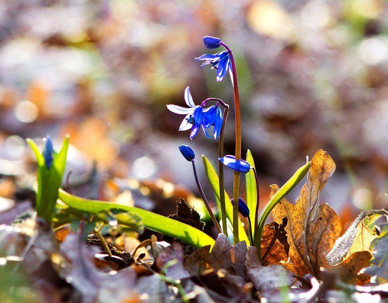 С праздником Весны!photo preview