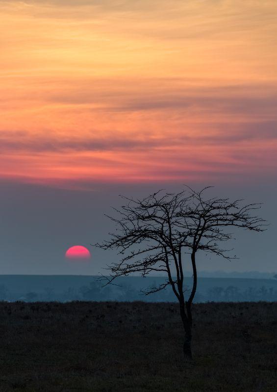 закат,одинокое дерево Простая история.photo preview