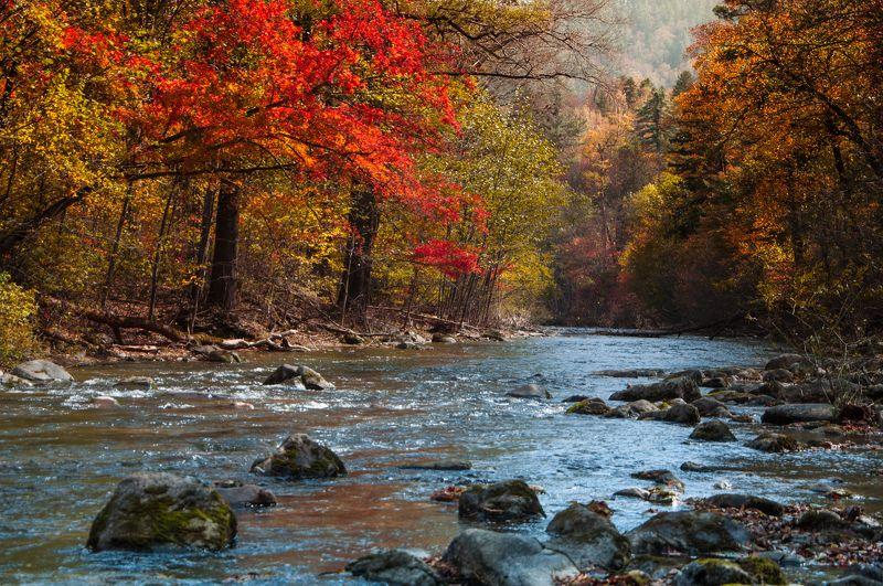 река, ручей, приморье, приморский край, дальний восток, лазовский район, лазо Приморье, река Лазовка осенью.photo preview