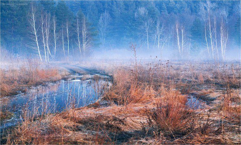 март, утро, туман, заморозок, дымка, туман, лес, опушка, дорога, весна, березы, рассвет Замер лес в прозрачной дымкеphoto preview