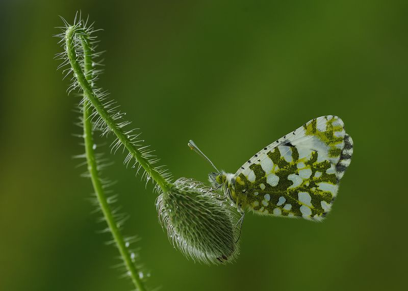 animal, flower, nature, macro, balance, butterfly, light, curve Balancephoto preview