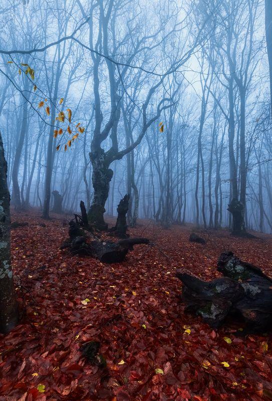 осенний лес,туман Осенний этюд.photo preview