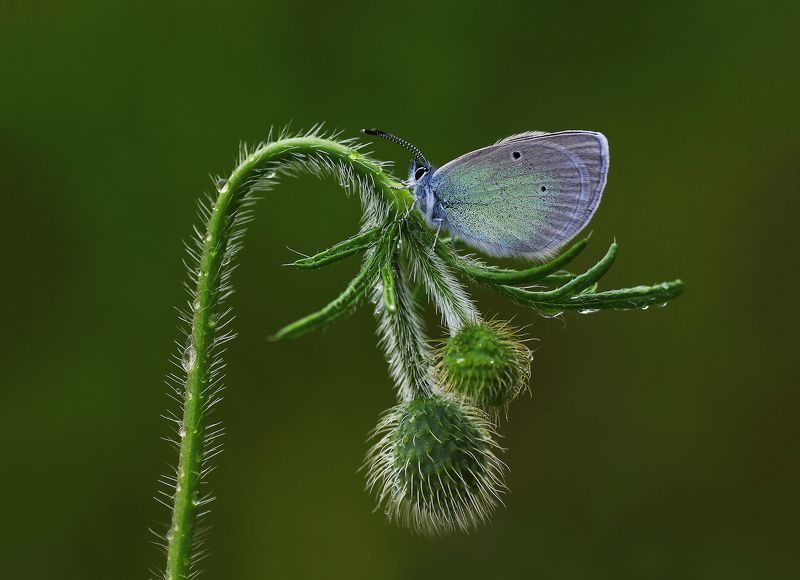 animal, nature, macro, flower, butterfly, blue, aesthetic,curve aestheticphoto preview