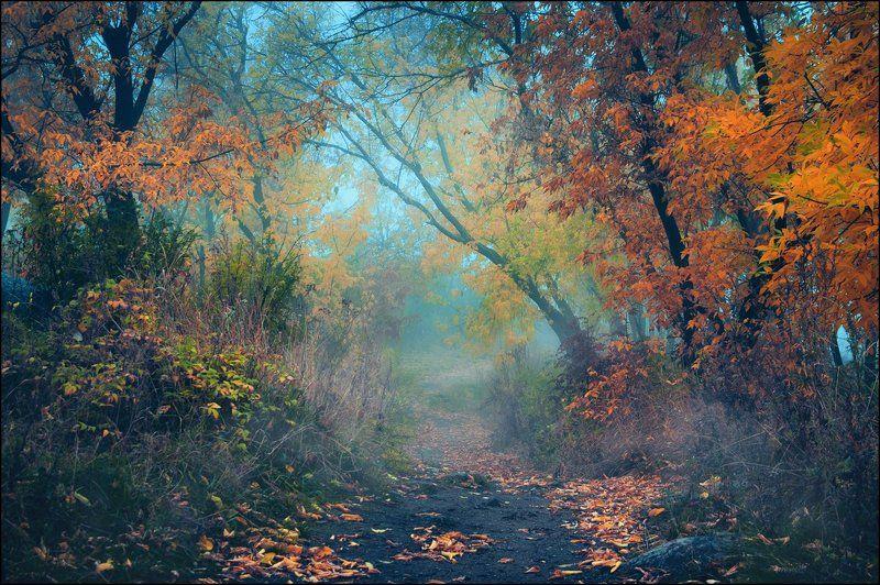 Тропа в осеньphoto preview