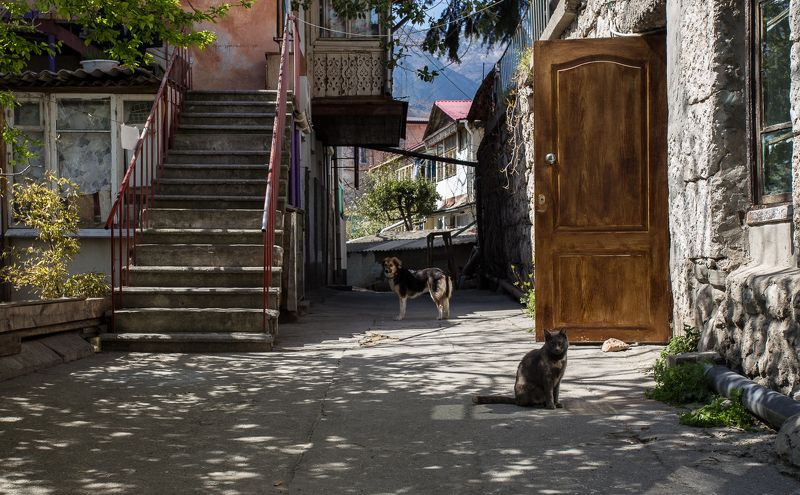 гурзуф, дверь старого дома, дворик, кошка, крым, ностальгия, собака Гурзуфский дворикphoto preview