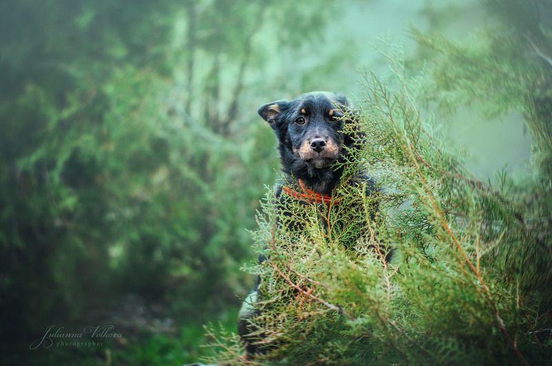 собаки,щенки, фотограф-анималист, природа, животные Мишкаphoto preview