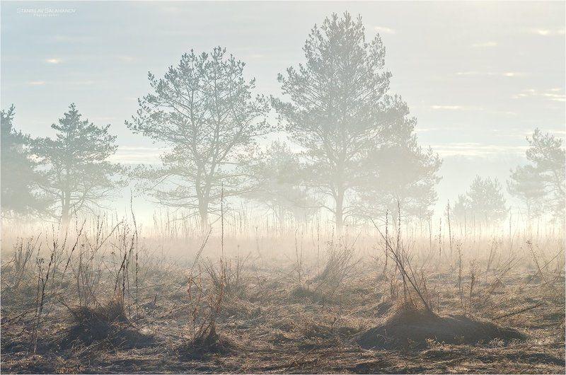 утро, туман, дымка, луг, весна, март Снег сошел. Запахло прелью.photo preview